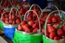 strawberry farm La Trinidad